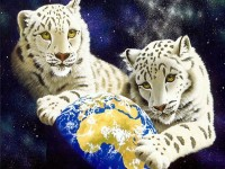 Собирать пазл White tigers онлайн