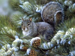 Собирать пазл Squirrel онлайн