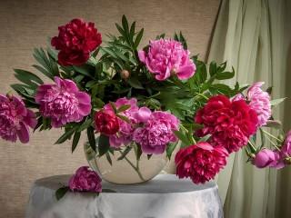Собирать пазл Buket pionov v vaze онлайн