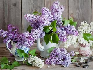 Собирать пазл Bouquets of lilacs онлайн