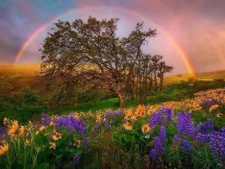 Собирать пазл Tree and rainbow онлайн