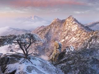 Собирать пазл Tree in stone онлайн