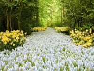 Собирать пазл Path in the forest онлайн