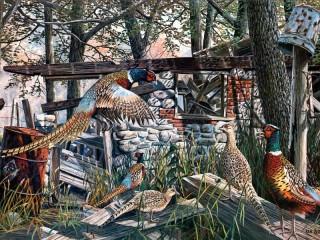 Собирать пазл Pheasants among the ruins онлайн