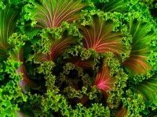 Собирать пазл fraktal salat онлайн
