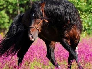 Собирать пазл Bay Horse онлайн