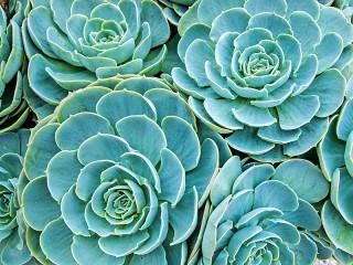Собирать пазл Cacti онлайн