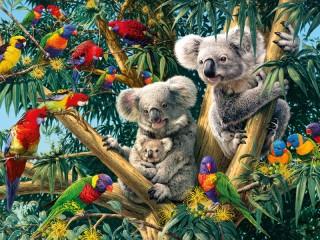 Собирать пазл Koalas and parrots онлайн