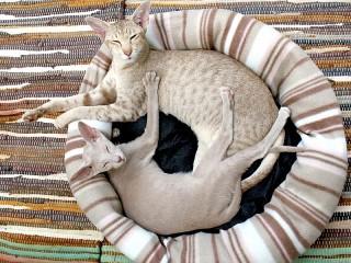 Собирать пазл Cats in a basket онлайн