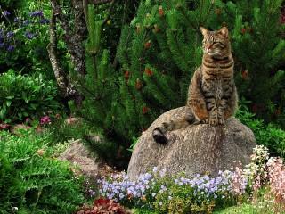 Собирать пазл Kot na kamne онлайн