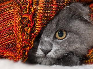 Собирать пазл Kitten under the rug онлайн