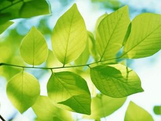 Собирать пазл Summer leaves онлайн