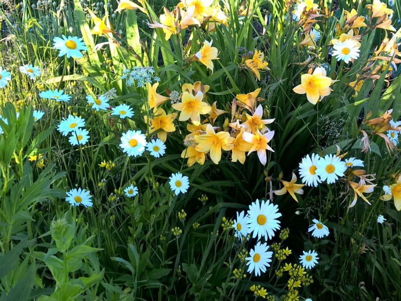 Jigsaw Puzzle Solve jigsaw puzzles online - Lilies and camomiles