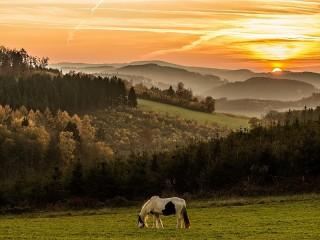 Собирать пазл Horse in the meadow онлайн