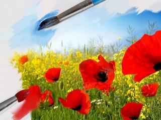 Собирать пазл poppies on canvas онлайн