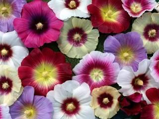 Собирать пазл Flowers онлайн
