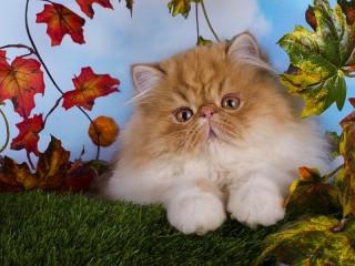 Собирать пазл Cutie онлайн