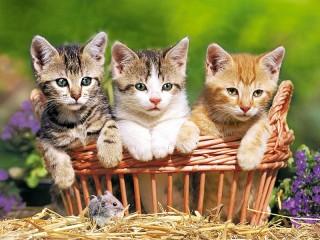 Собирать пазл Sweetheart trio онлайн