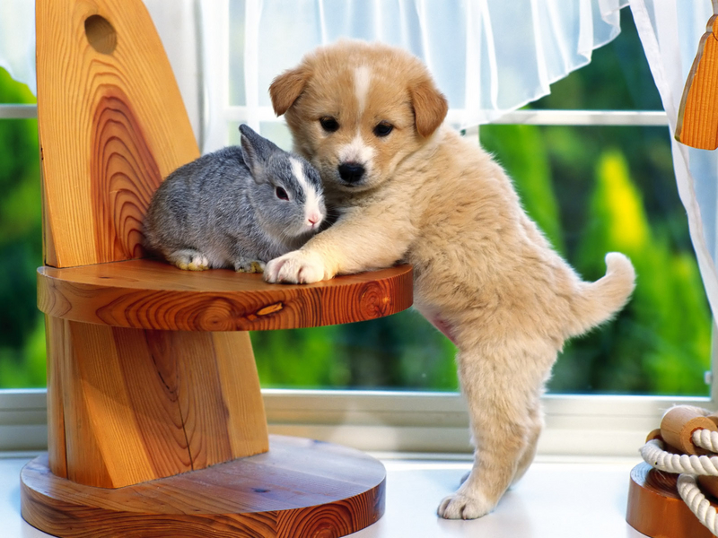 Jigsaw Puzzle Solve jigsaw puzzles online - Furry friends