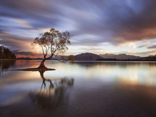 Собирать пазл Lonely tree онлайн