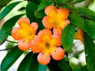 Собирать пазл Orange beauty онлайн