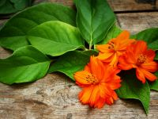 Собирать пазл Orange flower онлайн