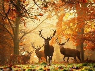 Собирать пазл Autumn rut онлайн