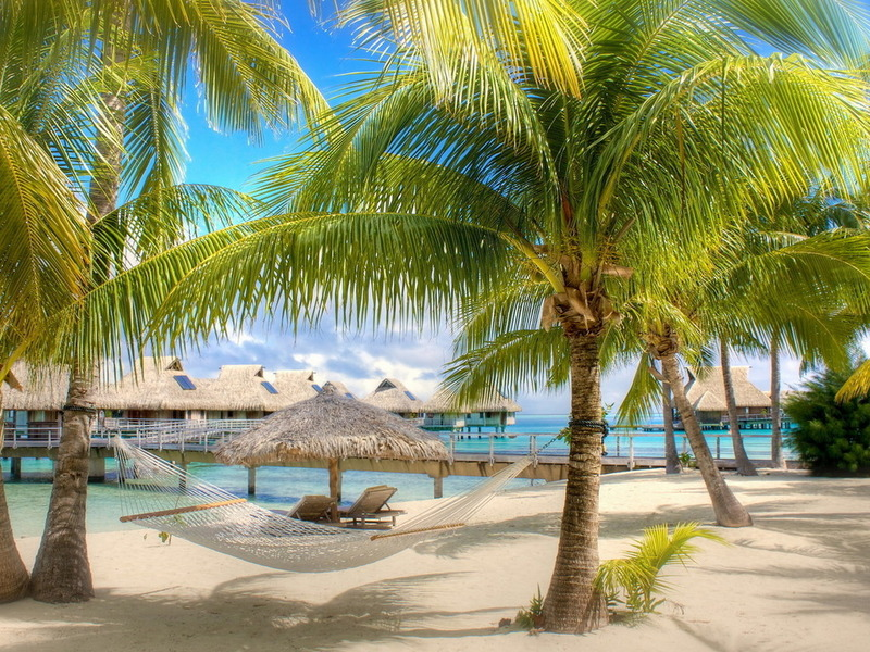 Jigsaw Puzzle Solve jigsaw puzzles online - palm trees