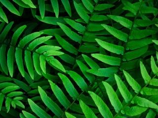 Собирать пазл Green leaves онлайн