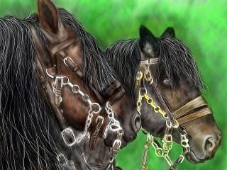 Собирать пазл A pair of horses онлайн
