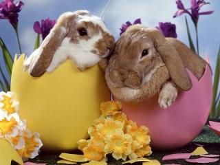 Собирать пазл Easter rabbits онлайн