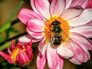 Собирать пазл Bee at work онлайн