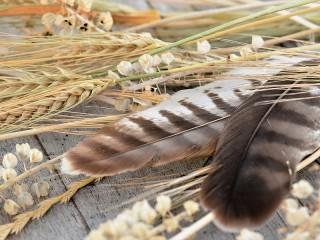 Собирать пазл Feathers and spikes онлайн