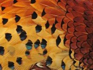 Собирать пазл Feathers онлайн
