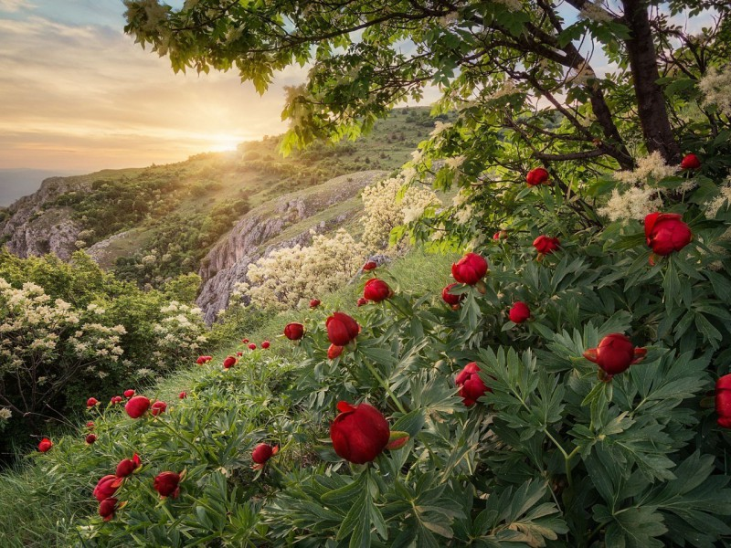 Jigsaw Puzzle Solve jigsaw puzzles online - Peonies on a shore