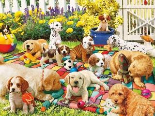 Собирать пазл Playground for puppies онлайн
