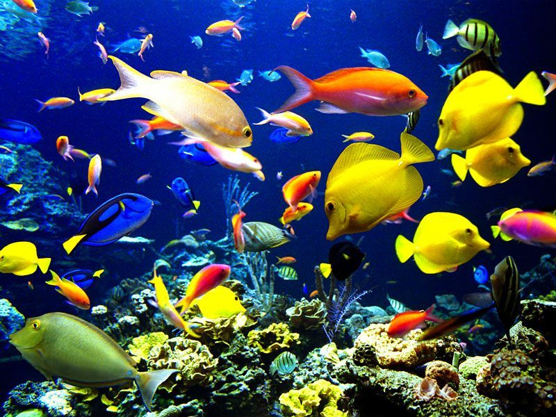 Jigsaw Puzzle Solve jigsaw puzzles online - The underwater world 2