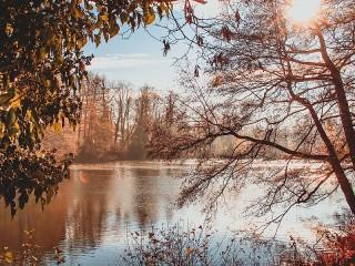 Собирать пазл Pond онлайн