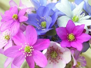 Собирать пазл Colorful flowers онлайн