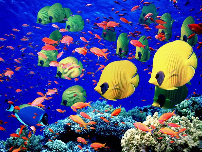 Jigsaw Puzzle Solve jigsaw puzzles online - The fish on the reef