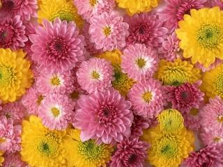 Собирать пазл Pink and yellow онлайн