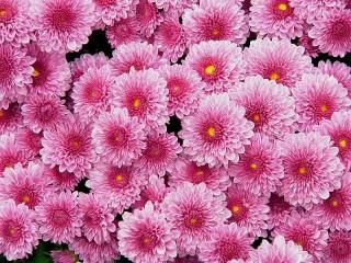 Собирать пазл Pink carpet онлайн
