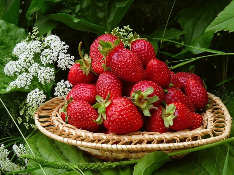 Jigsaw Puzzle Solve jigsaw puzzles online - Garden strawberry