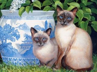 Собирать пазл Siamese cats онлайн