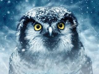 Собирать пазл Blue owl онлайн