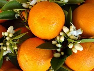 Собирать пазл Juicy tangerines онлайн
