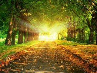 Собирать пазл Solar path онлайн