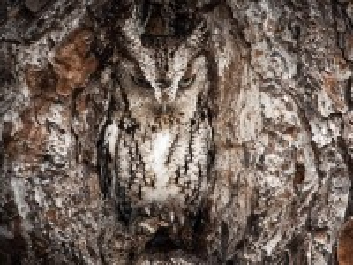 Собирать пазл Owl in the hollow онлайн