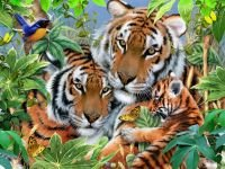 Собирать пазл Tigers онлайн