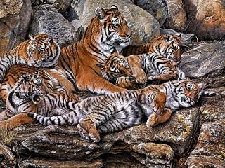 Собирать пазл Tiger family онлайн